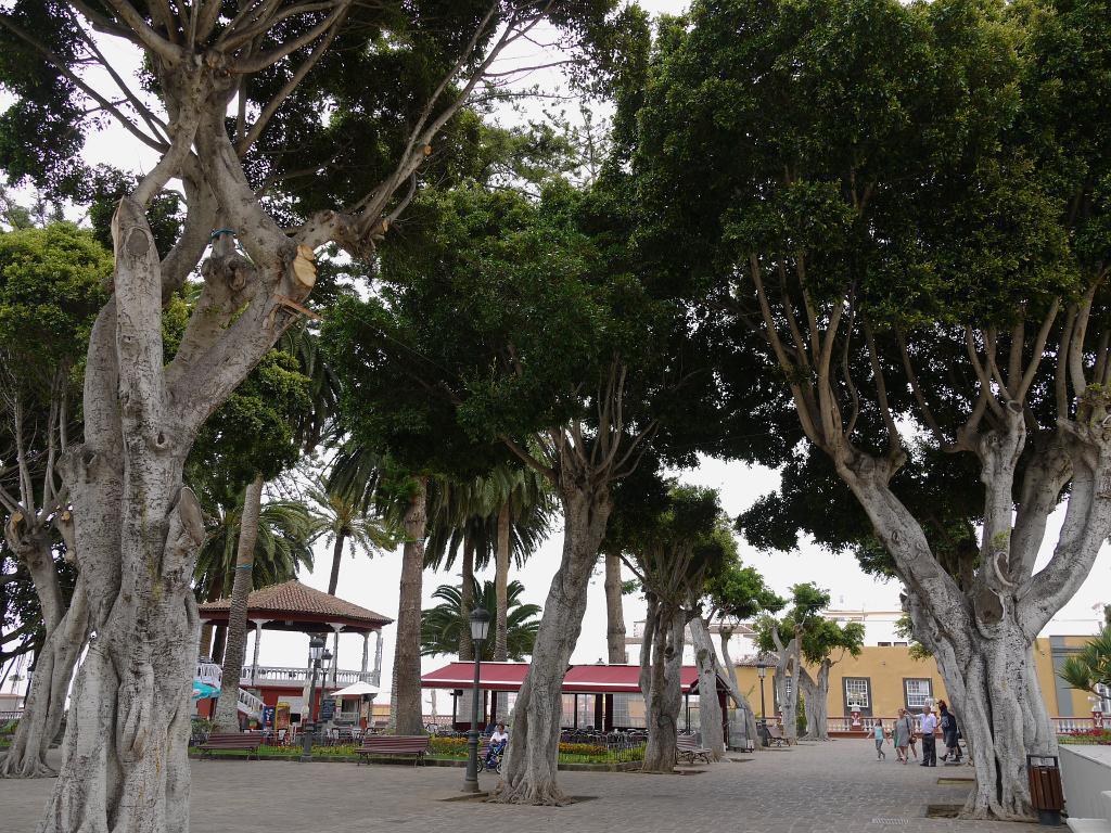 Album Tenerife rondreis 5/P1010605 Tenerife Icod de los ...