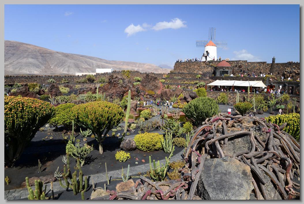 Lanzarote het fraaie vulkaanlandschap van dit canarische for Jardin de cactus lanzarote