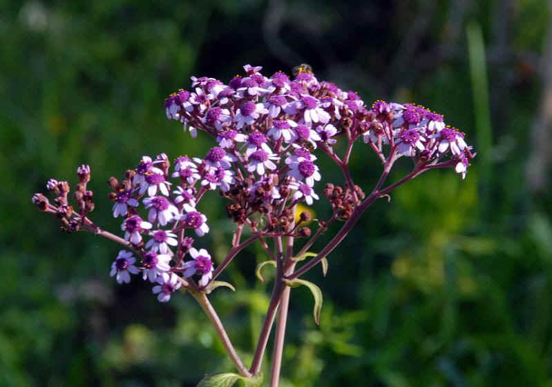 Pflanzen und blumen for Blumen und pflanzen bestellen